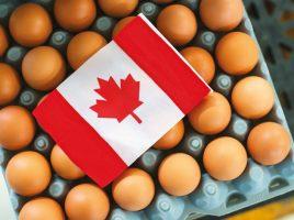 2020_Egg-Farmers-of-Canada_Annual-Report-95